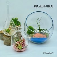 Mini Gardens & Fairy Gardens & Accessories