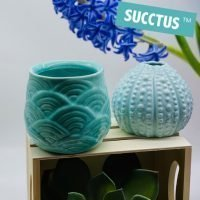 Vases/ Hydro Vessels